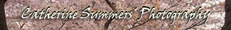 Catherine Summers' Photography Logo