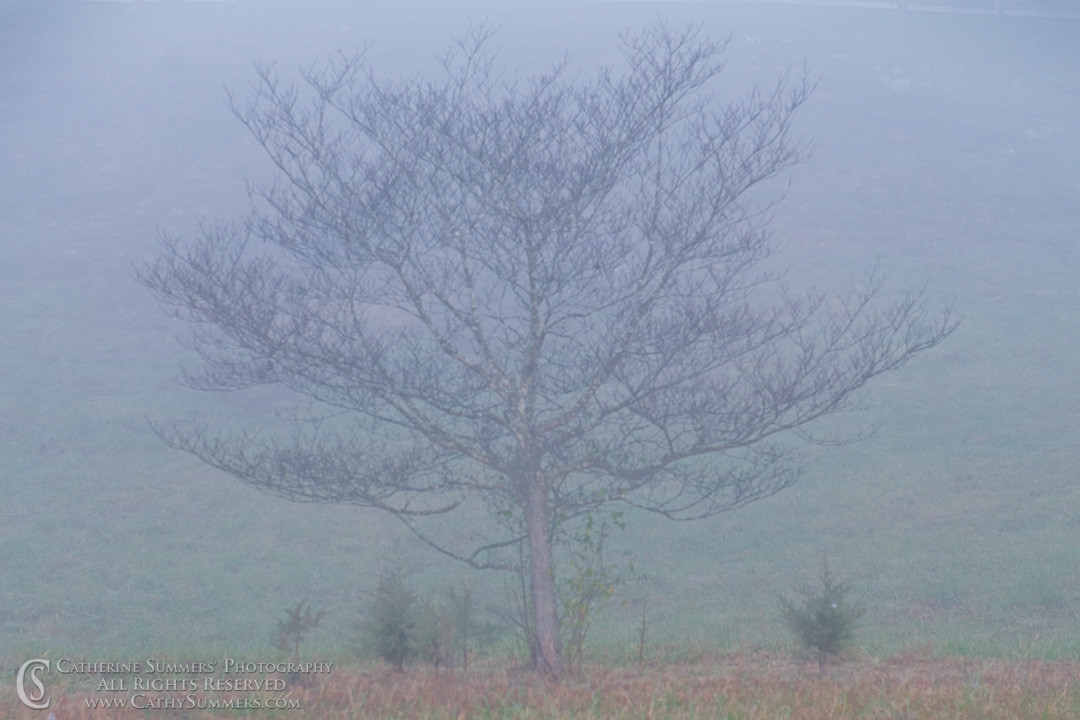 November Dogwood in the Fog