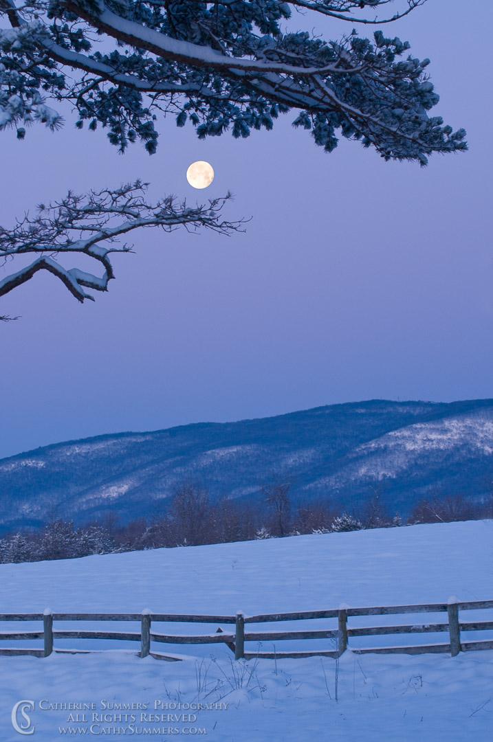 Moon and Pine  at Dawn #1