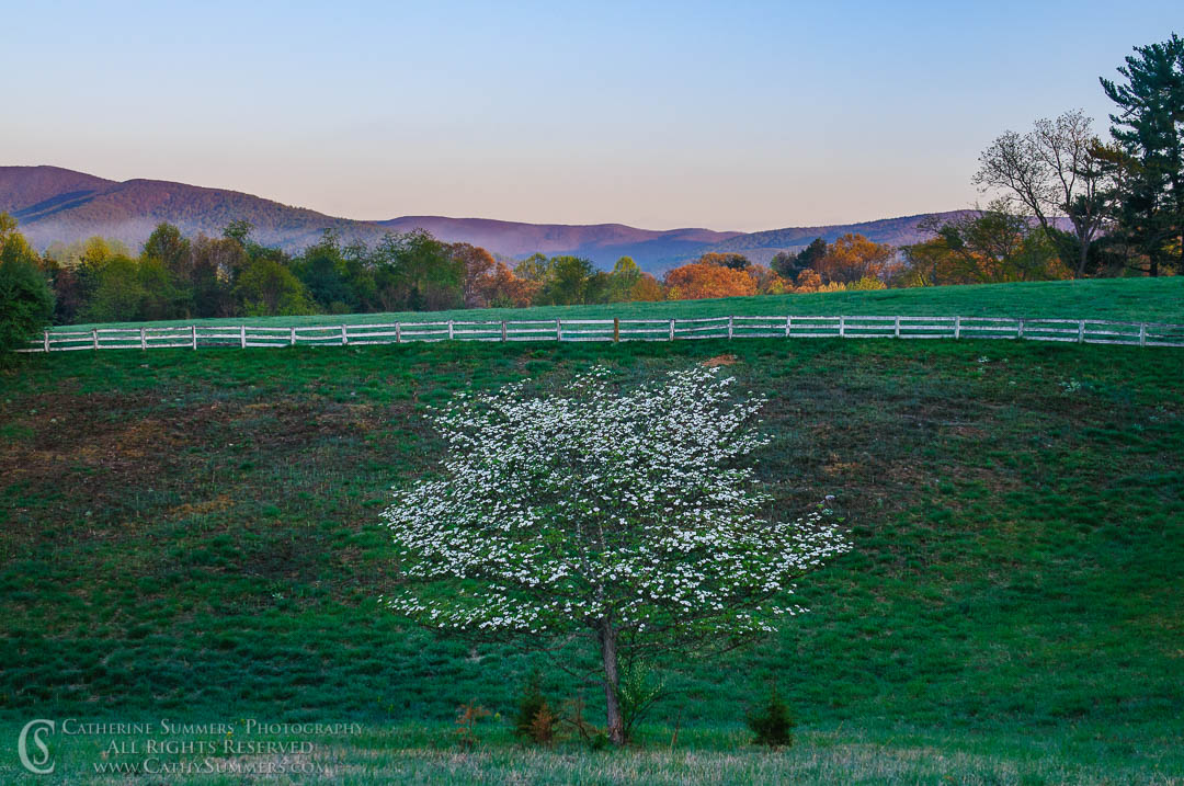 20100411_010: flowers, spring, morning, dogwood, Blue Ridge Mountains, field, sunrise, Knole