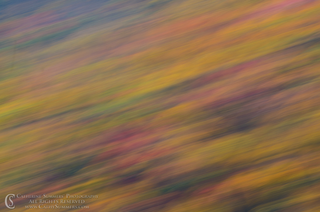 20111016_044: Fall Colors - Panning Blur #3, Shenandoah National Park