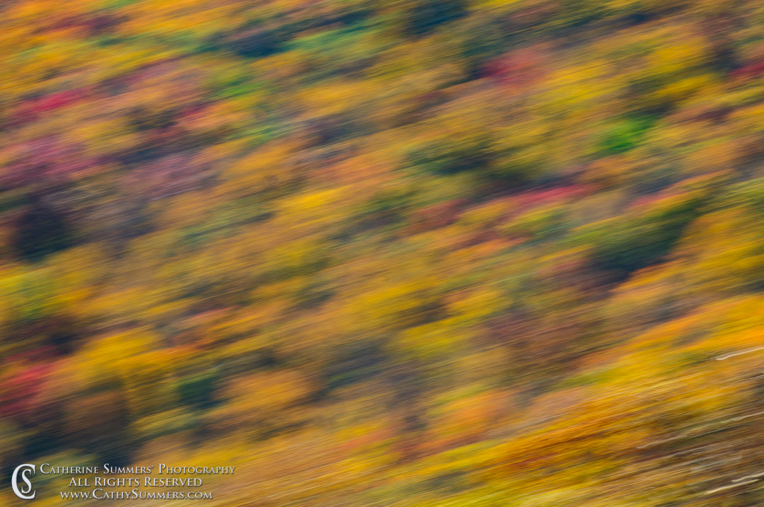 20111016_048: Fall Colors - Panning Blur #2, Shenandoah National Park