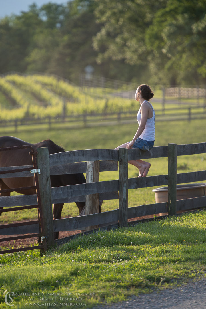 20130526_062: fence, horses, Elena, vineyard