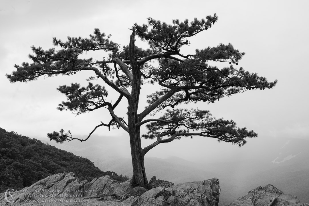 20130810_031_BW: clouds, horizontal, fog, black and white, pine tree, Raven's Roost