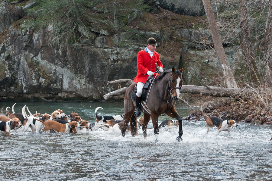 20131130_060: Fox Hunting, Moormans River, river, Millington, hounds, Huntsman, Blue Hole, Moormans River < Albemarle