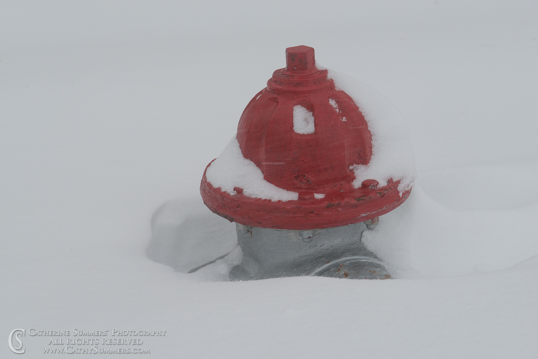 Snow Covered Fire hydrant: Falls Church, Virginia