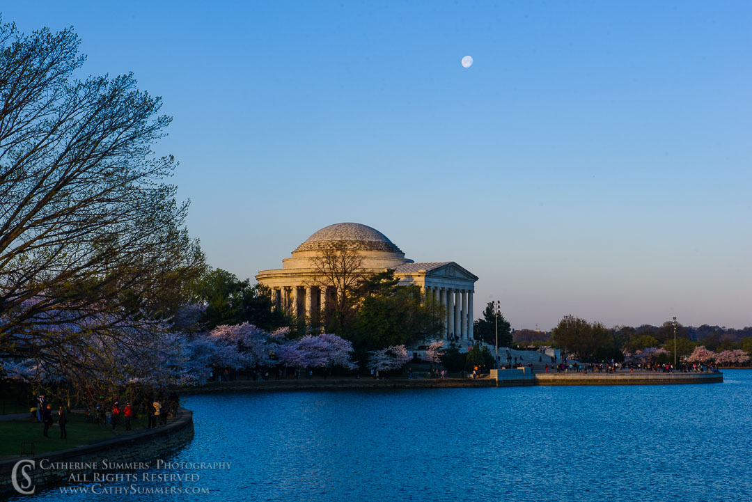 Full Moon, Cherry Trees and Jefferson Memorial at Sunrise with Reflection in Tidal Basin:  Washington, DC