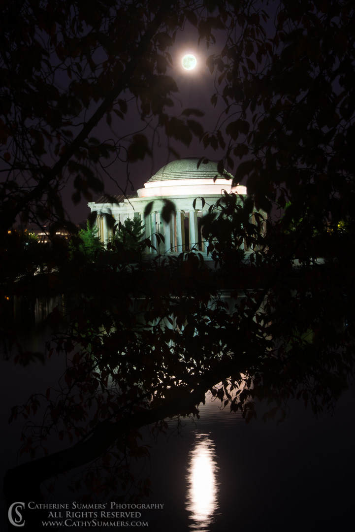 Full Moon and Jefferson Memorial through Cherry Tree leaves after dusk: Washington, DC
