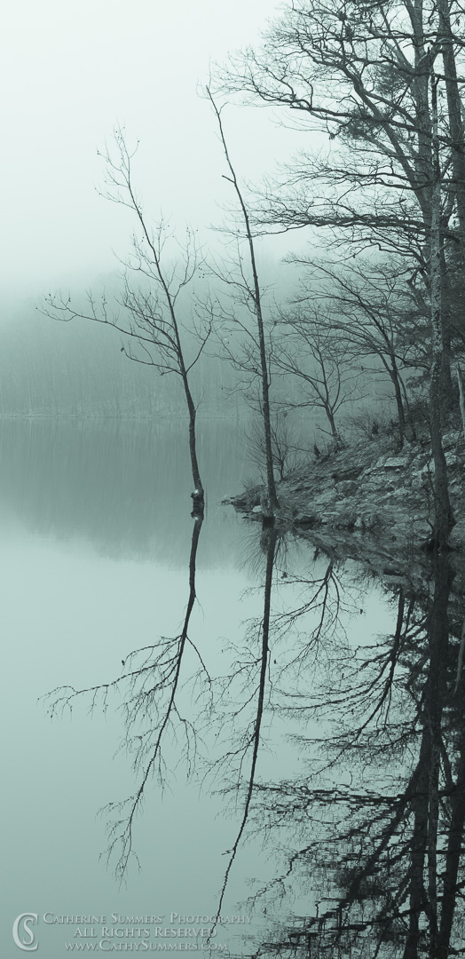 20161226_034_BW: vertical, reflection, trees, fog, Sugar Hollow