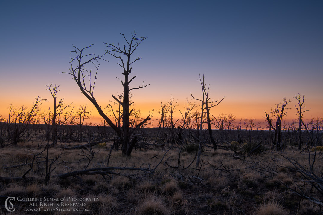 20180918_001: trees, dawn, burned, pine tree, silhouette, Mesa Verde National Park