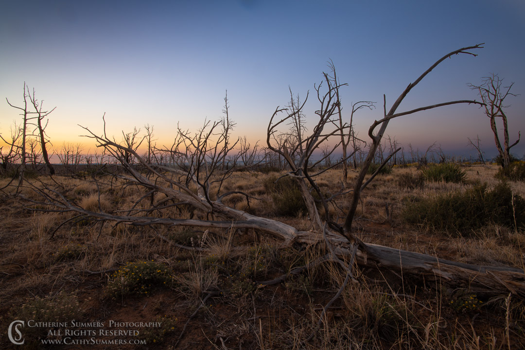 20180918_004: trees, dawn, burned, pine tree, silhouette, Mesa Verde National Park