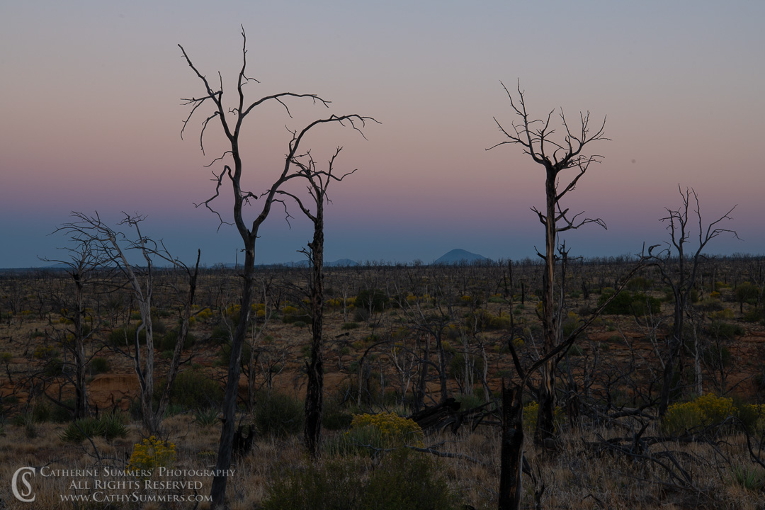 20180918_008: trees, dawn, burned, pine tree, silhouette, Mesa Verde National Park