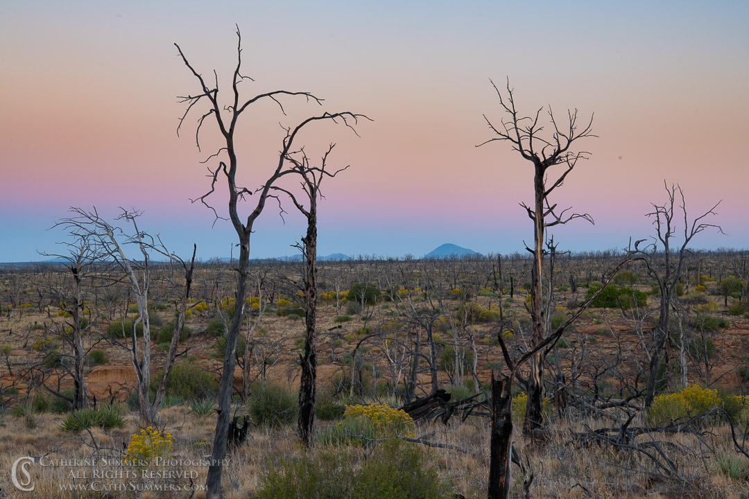 20180918_009: trees, dawn, burned, pine tree, silhouette, Mesa Verde National Park