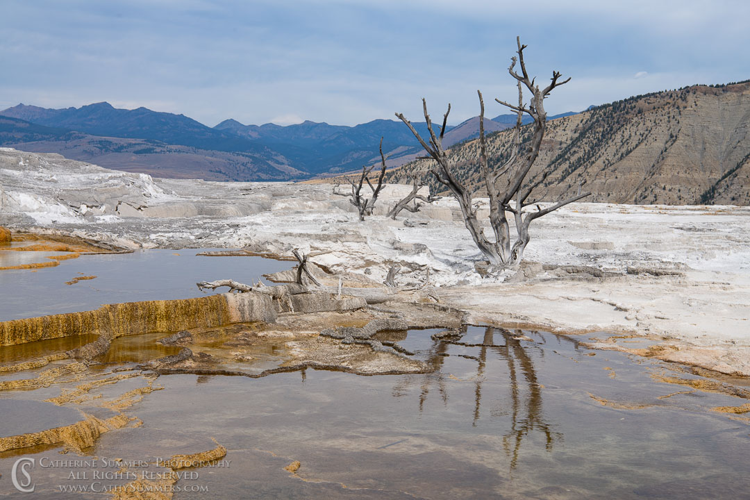 20180922_010: reflection, tree, Yellowstone National Park, Mammoth Hot Springs