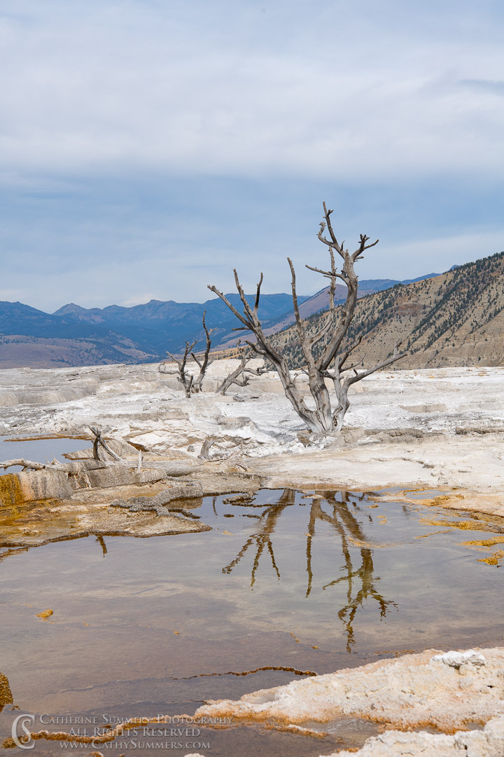 20180922_011: reflection, tree, Yellowstone National Park, Mammoth Hot Springs