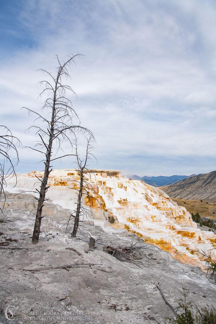 20180922_015: trees, Yellowstone National Park, Mammoth Hot Springs
