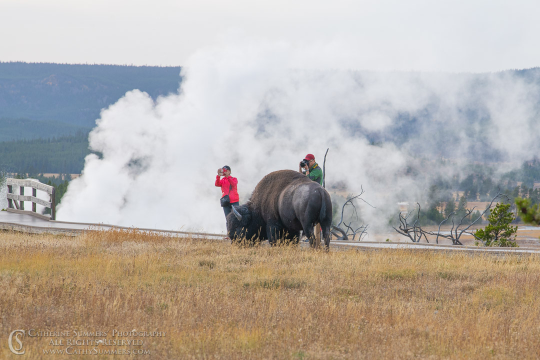 20180922_070: Yellowstone National Park, bison