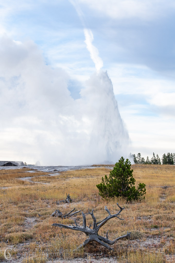 20180923_014: geyser, Yellowstone National Park, Old Faithful
