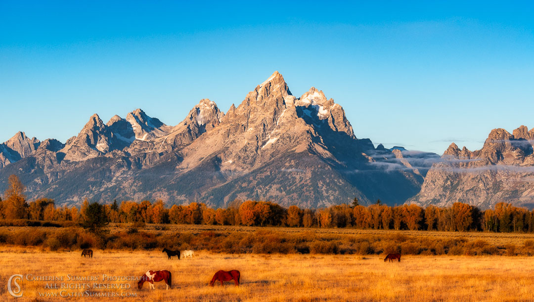 Horses in Pasture with the Tetons on an Early Autumn Morning: Grand Teton National Park