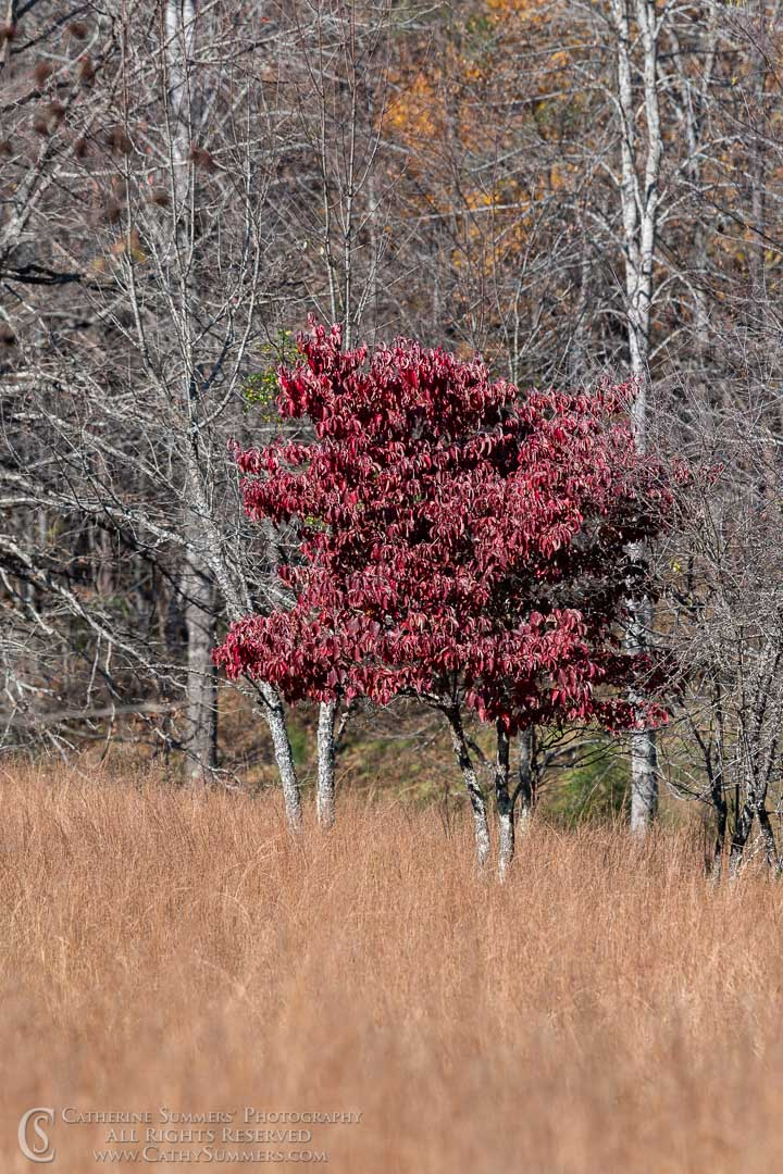 20181110_309: autumn, grass, dogwood, branches, field, forest