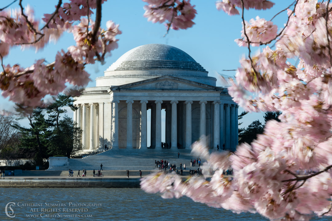 Jefferson Memorial and Cherry Blossoms in the Wind