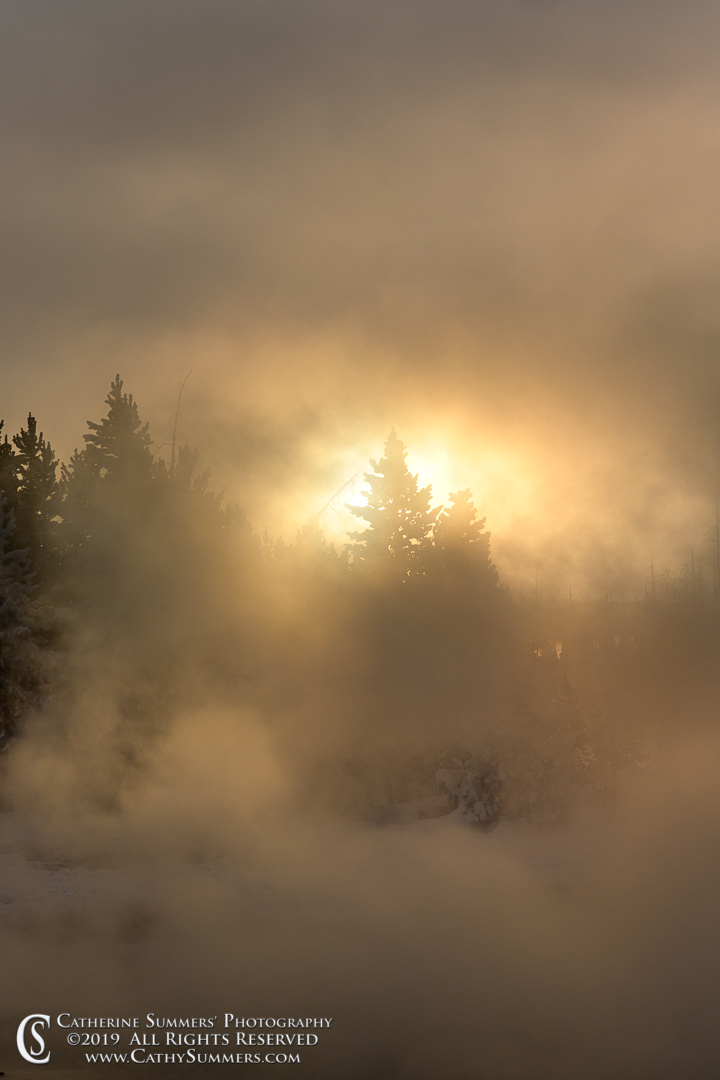 Sun Through the Steam and Pine Trees at Black Sand Basin / Bison Composite