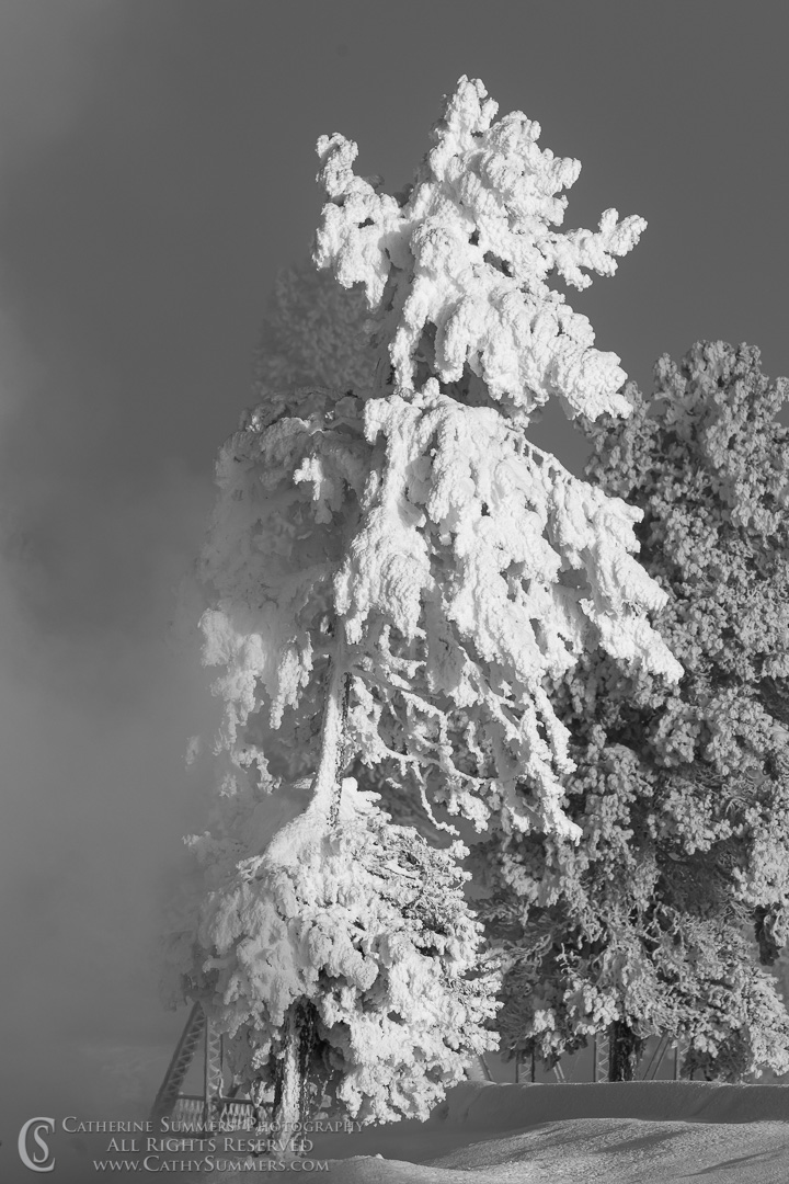 20191230_032: vertical, trees, Winter, Firehole River, black and white, rime ice, steam