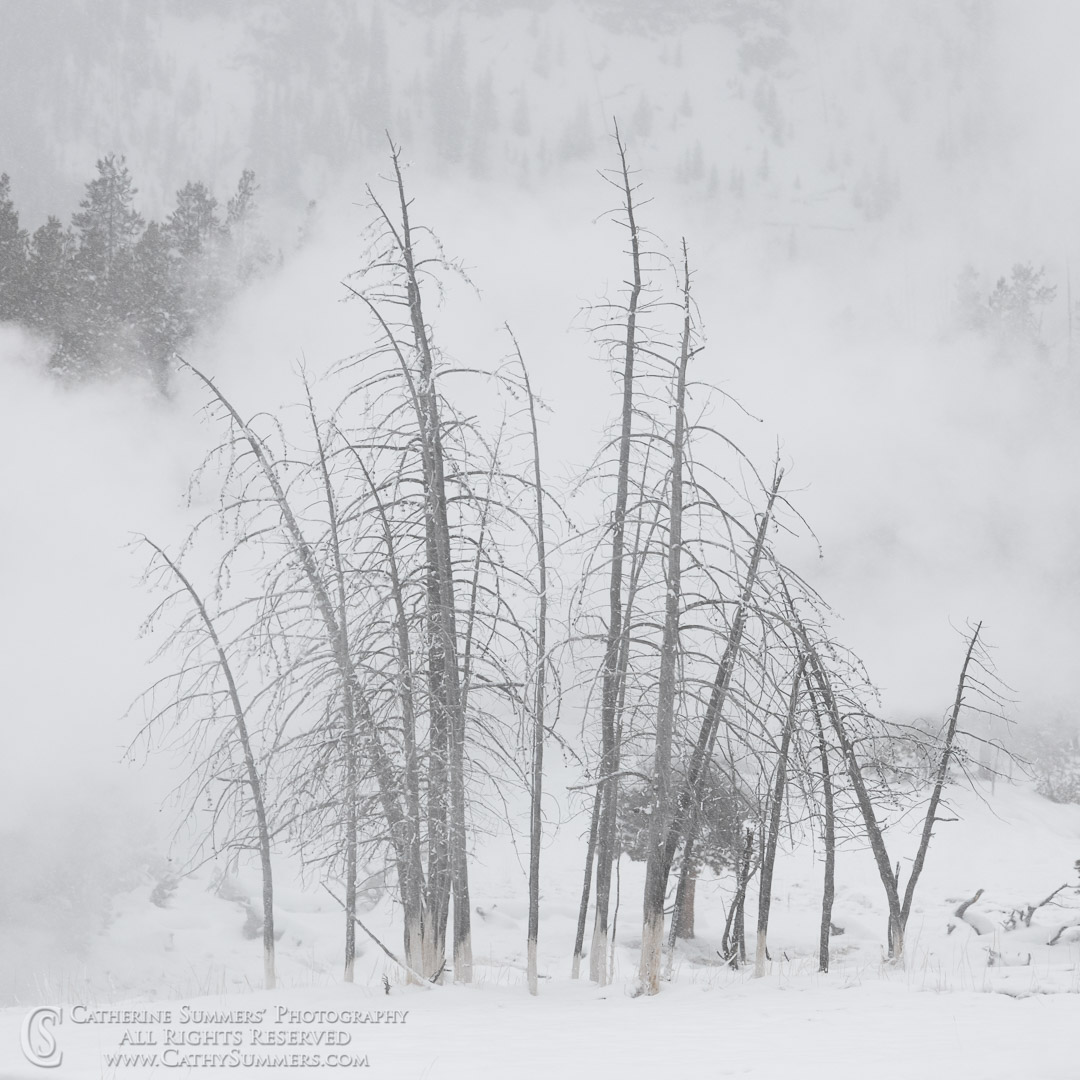 20191231_058: trees, Winter, snow, square, Upper Geyser Basin, steam