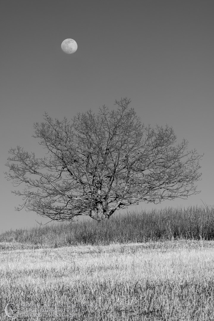 20200307_406: sunset, vertical, moon, tree, Winter, Shenandoah National Park, black and white, grayscale, Big Meadows, monochormatic
