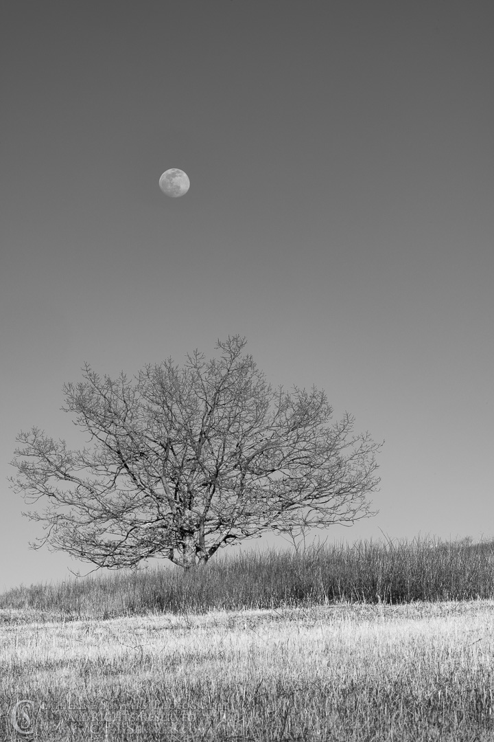 20200307_409: sunset, vertical, moon, tree, Winter, Shenandoah National Park, black and white, grayscale, Big Meadows, monochormatic