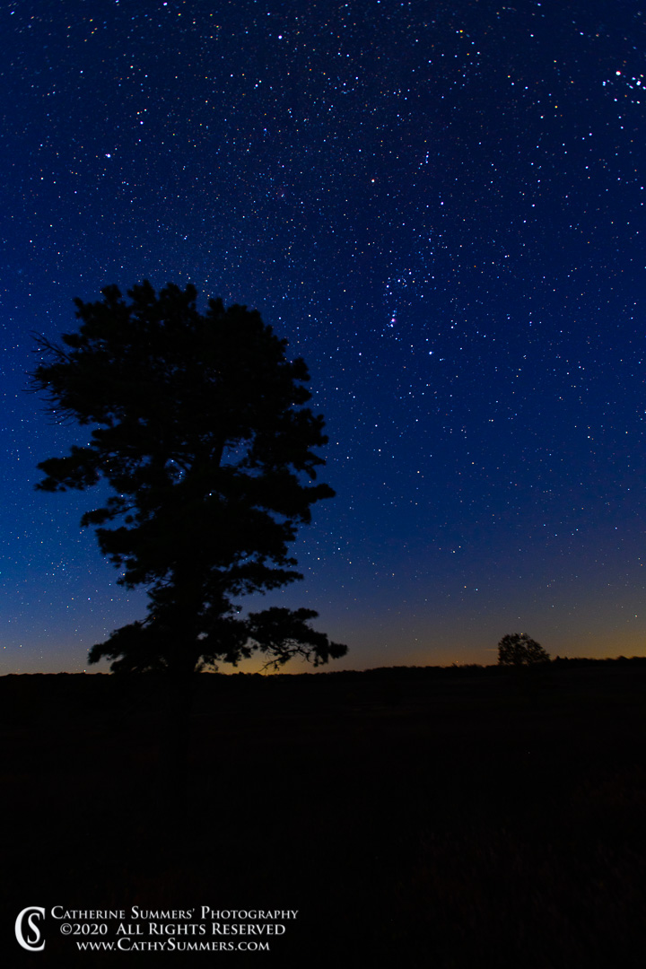 Orion and a Sky Full of Stars Above Big Meadows as the Night Fades