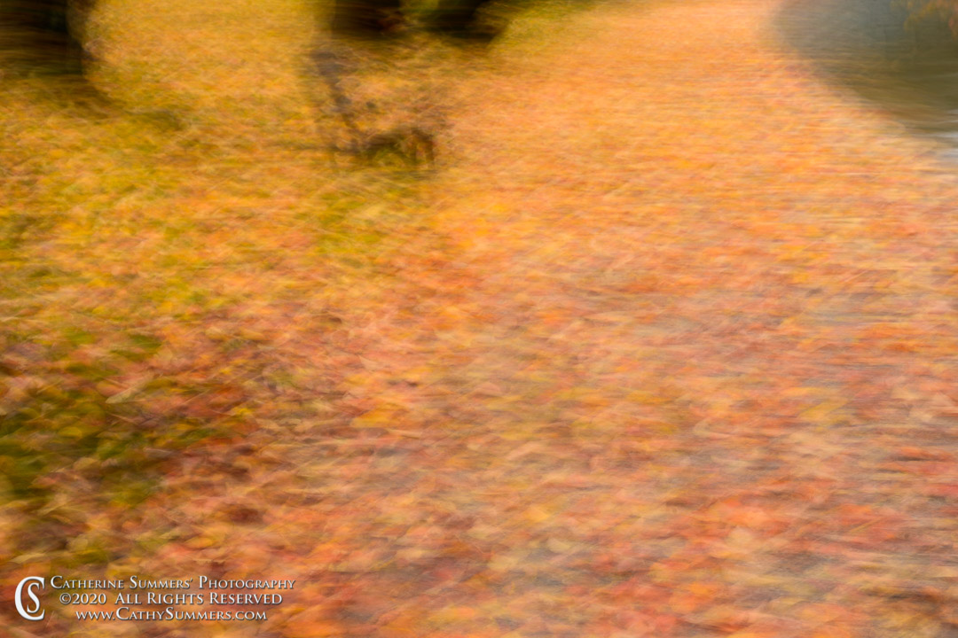 Not Quite Intentional Camera Movement on a Rainy Autumn Day at the Tidal Basin