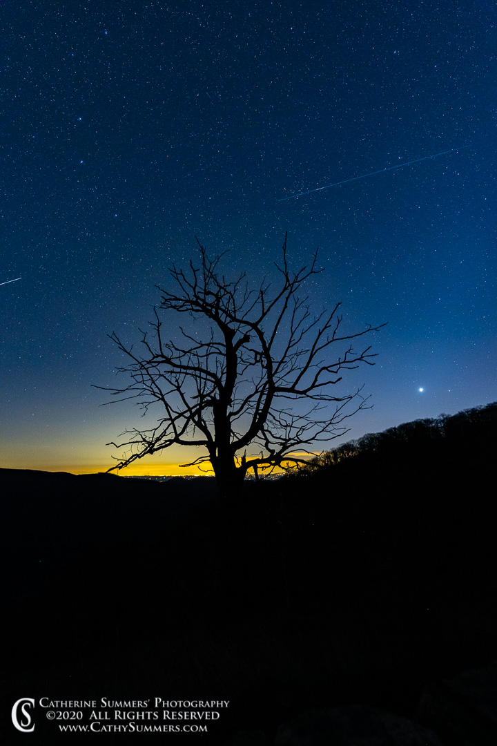 Meteorite and Silhouetted Tree Before Dawn on Skyline Drive