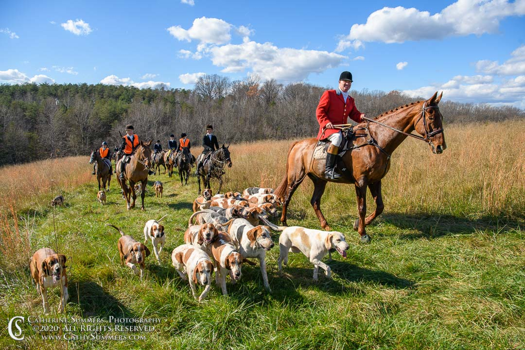 fox hunting, hounds, riders