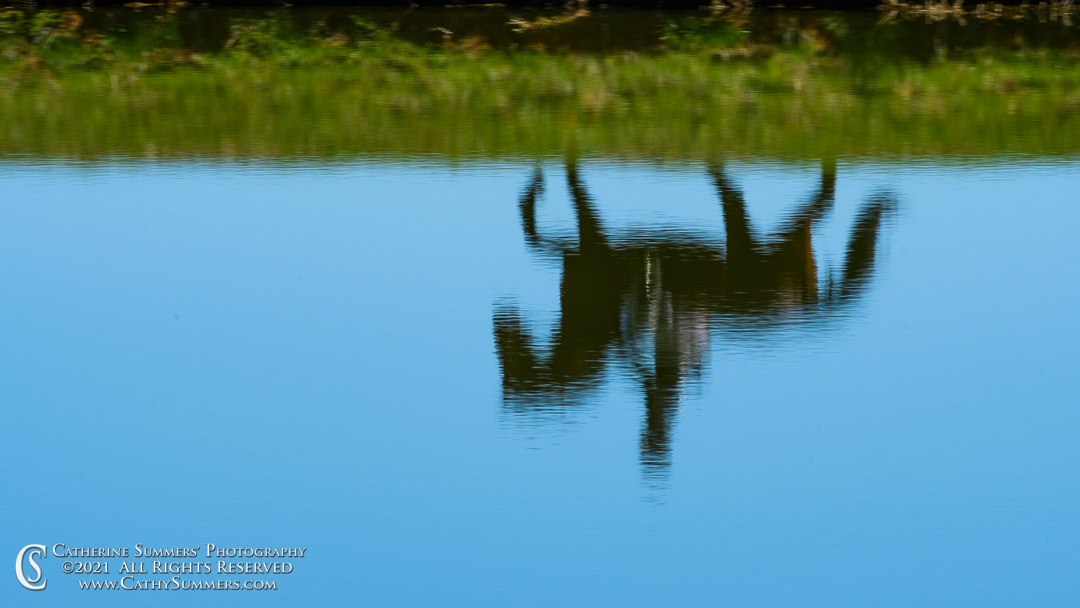 horse, rider, reflection