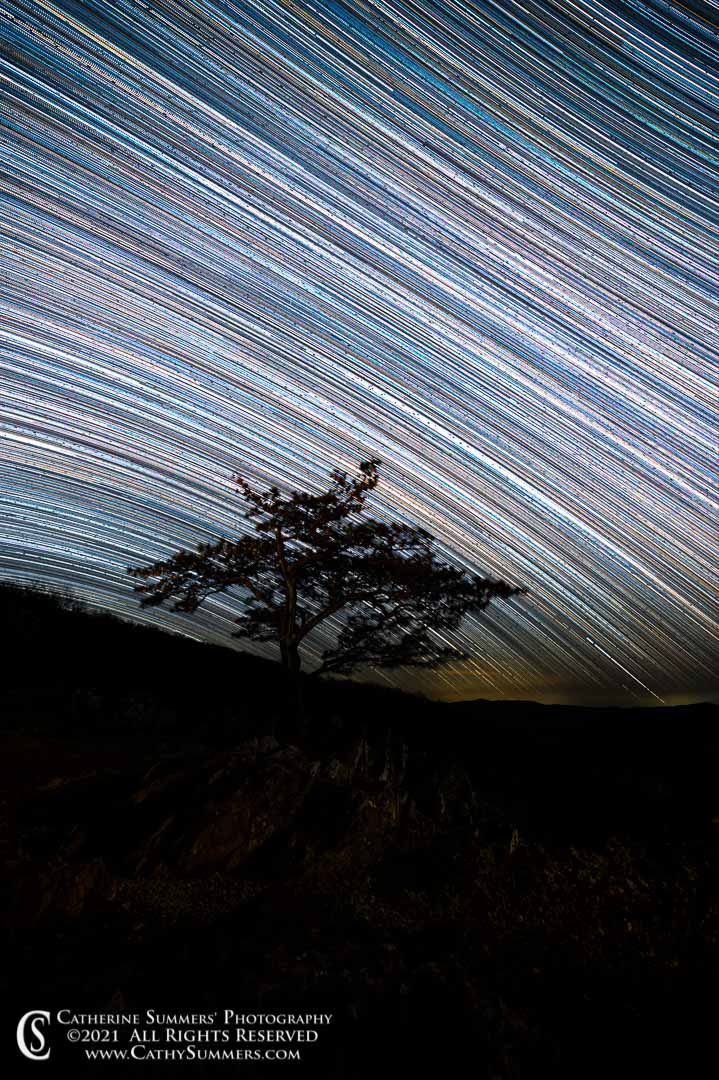 Star Trails Over the Ravens' Roost Pine Tree on an April Night - Composite of ~ 400 individual photos