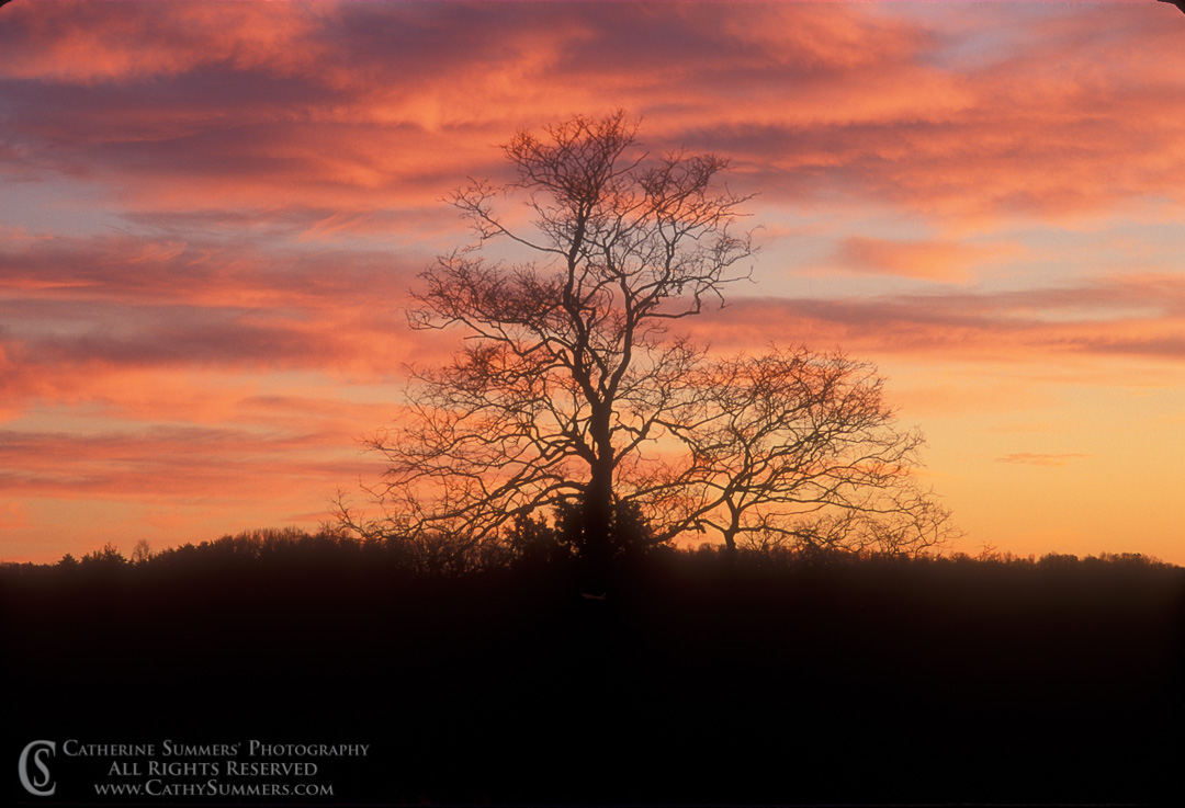 Winter Sunset Clouds and Tree Silhouette: Albemarle County, Virginia
