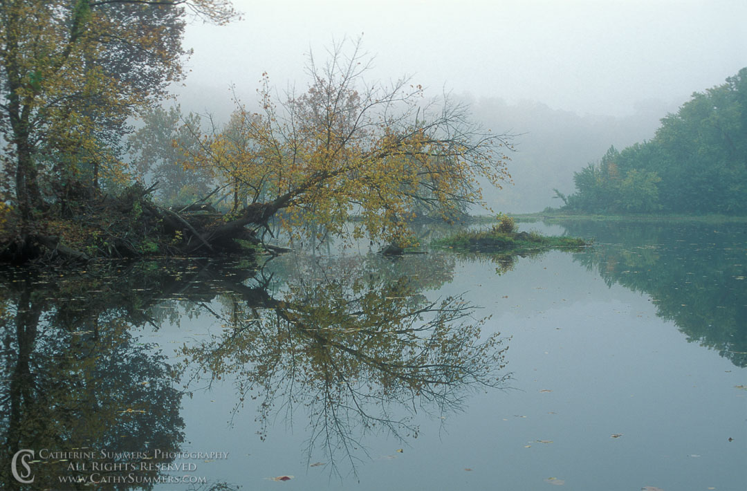 91_1431: reflection, horizontal, Potomac, autumn, morning, fog