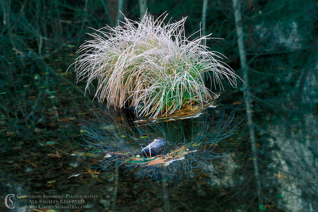 91_1900: reflection, horizontal, grass, Merced River, Winter, Yosemite National Park