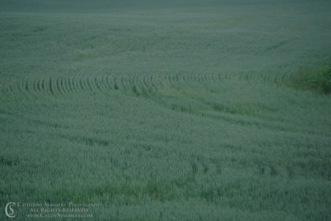 92_0765: horizontal, field, alfalfa, green, patterns