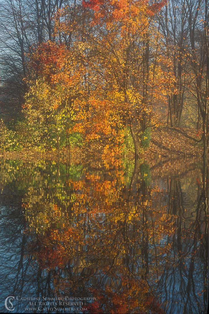 Title: Rorschach #1; Keywords: autumn, pond, reflection, vertical, Virginia