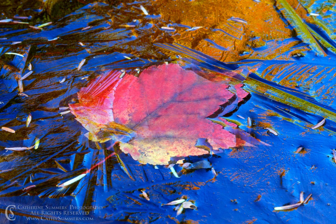 AM_2000_001: Frozen Leaf & Reflections