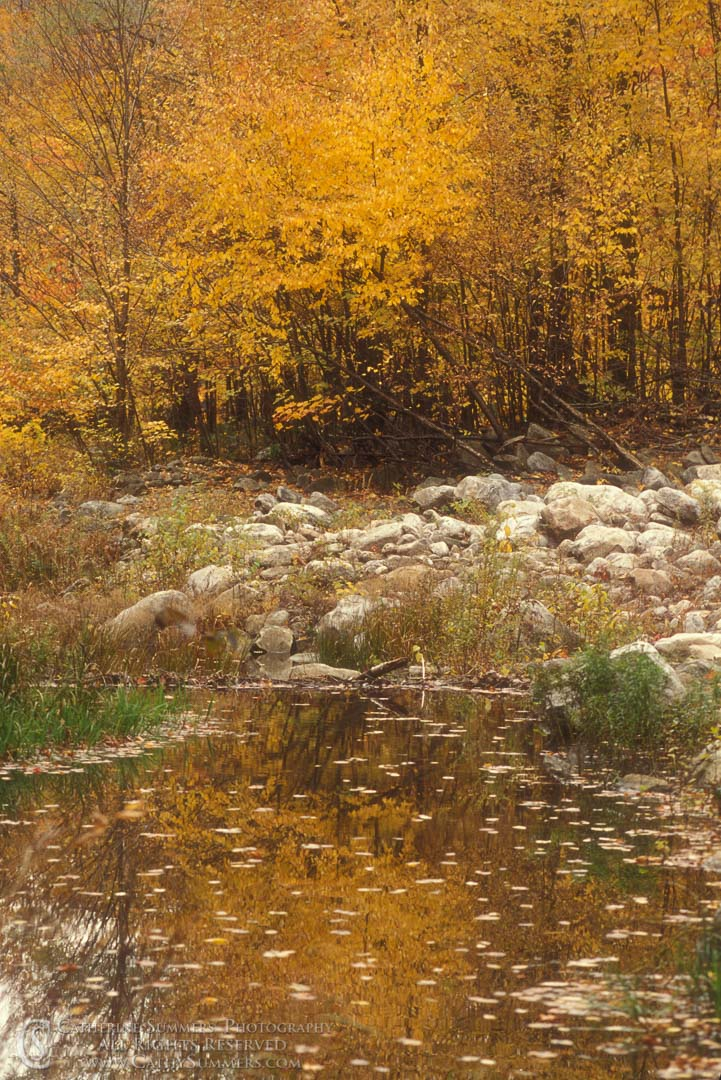 Fall Colors and Reflection on Red Creek #3