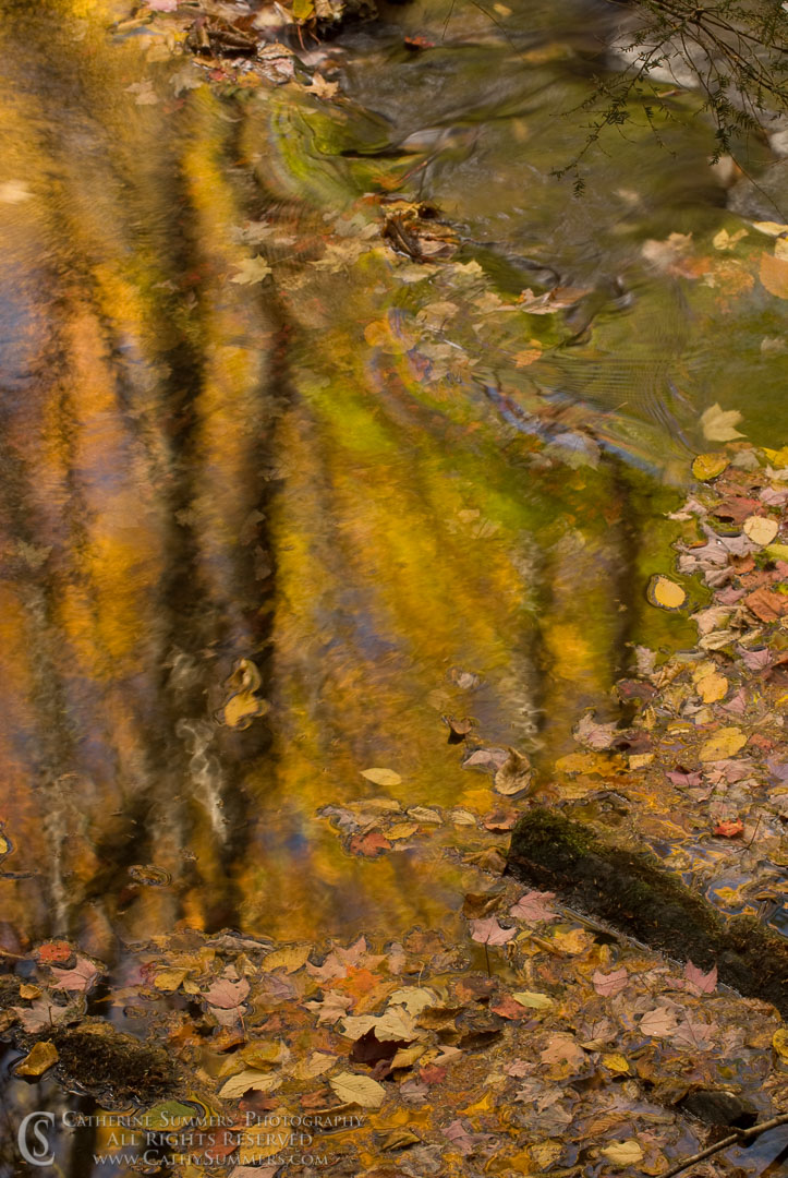 AR_2007_004: Reflections in Seneca Creek, #1