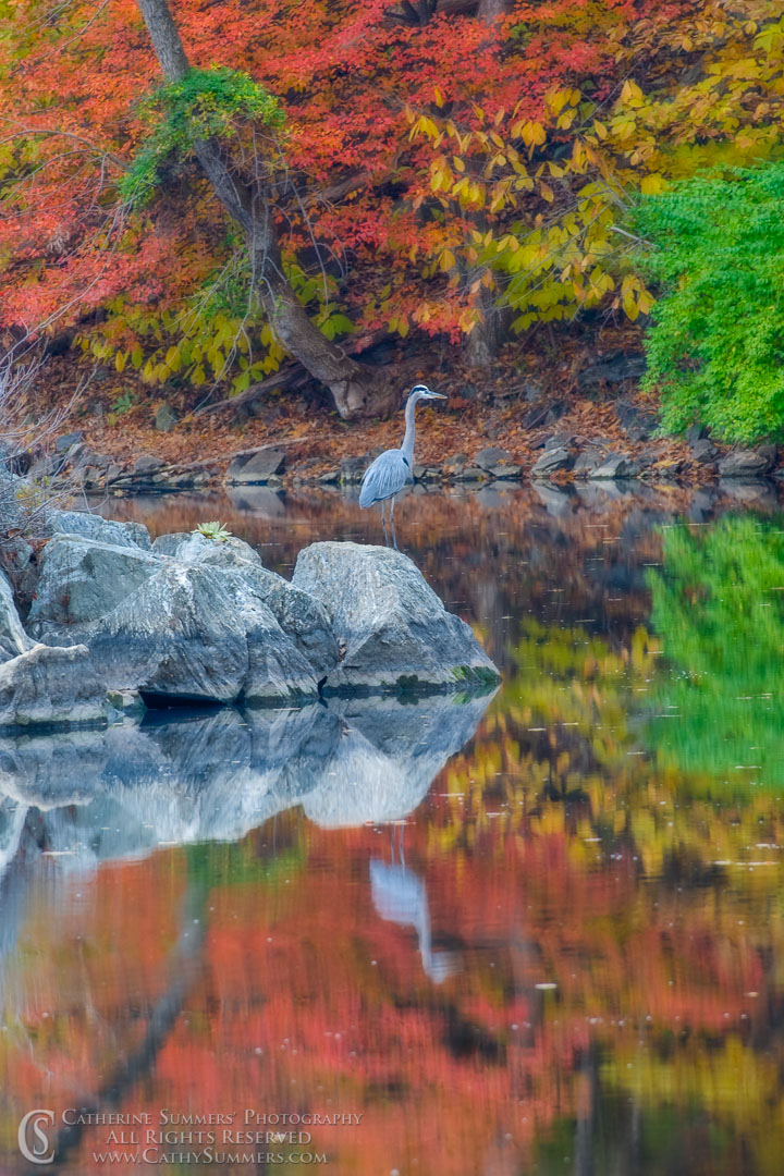 Heron and Reflection #1