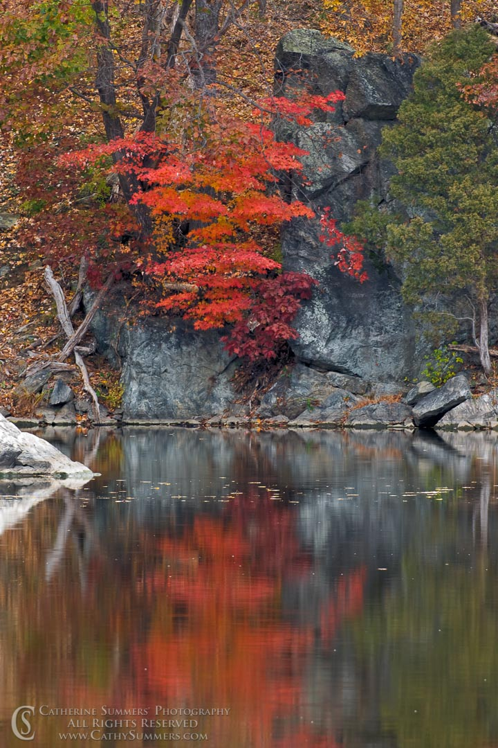 Rock and Autumn Trees Reflected in the C&O Canal: Great Falls National Park, Maryland