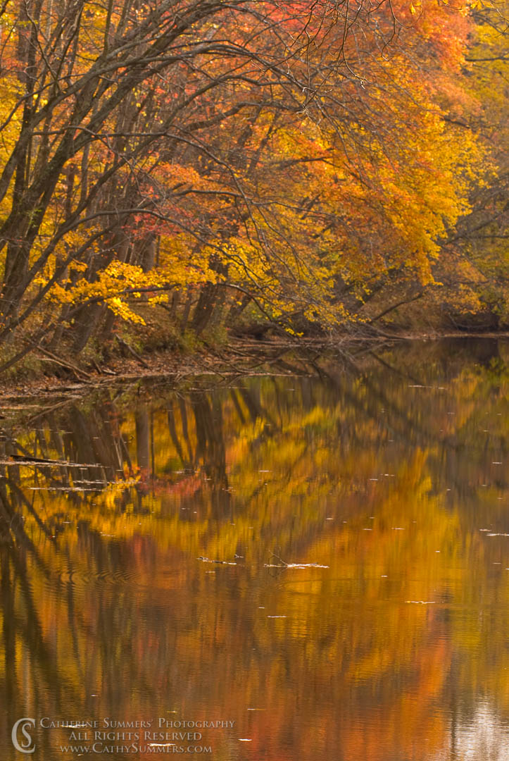 Autumn Trees and Reflections in the C&O Canal