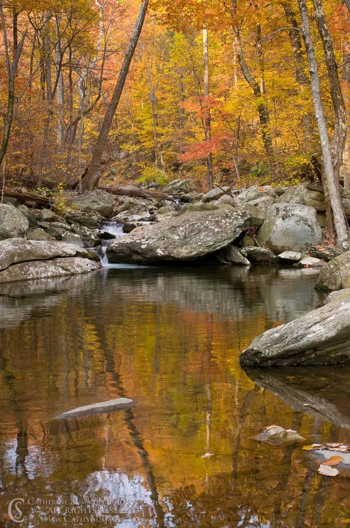 White Oak Canyon Reflection #2