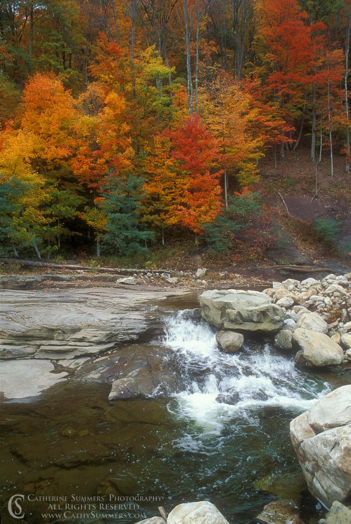 AS_1993_010: Fall Colors on Red Creek #2