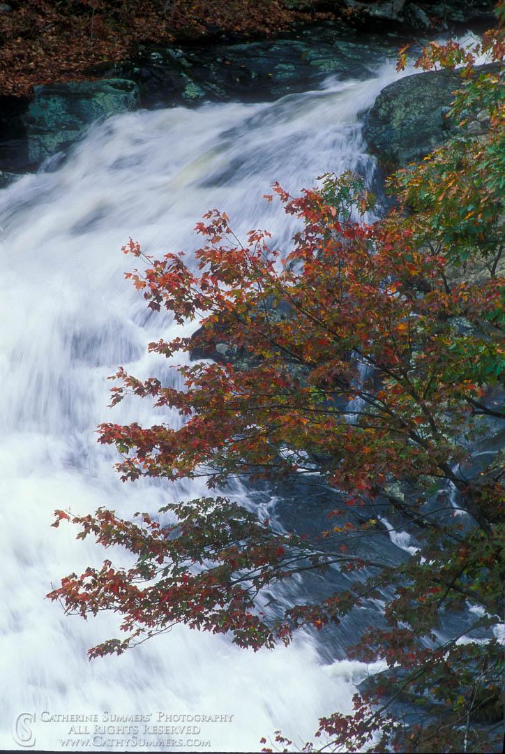 Oak Tree and Waterfall, Whiteoak Canyon
